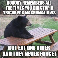 Image tagged in funny memes,bear