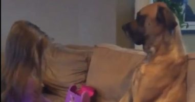 A Sweet Little Girl Gives Her Dog The Most Adorable Checkup