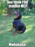 Condescending Rottweiler