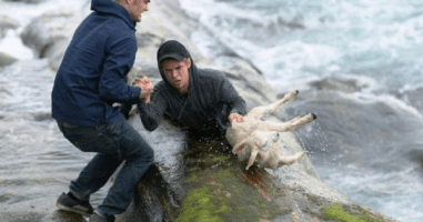 20 Times Animals Were Miraculously Saved By Absolutely Amazing People.