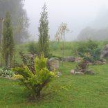 Туман как нельзя кстати придаёт саду эльфийскую загадочность и утончённость