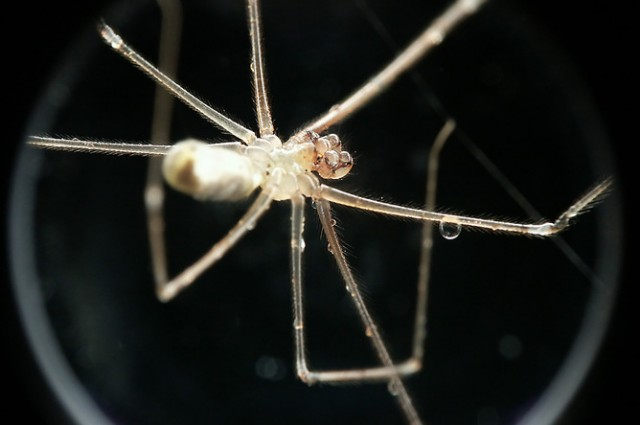 TC spider fear