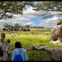 """Safari Africa!"" Revealed at Columbus Zoo"