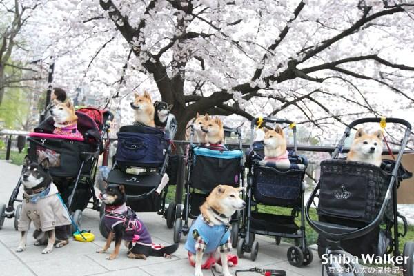 上野公園!かわいいお友達&おいしいランチ♪