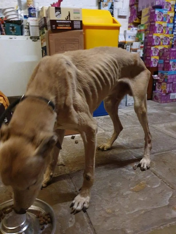 0_Starving-dog-that-has-seen-the-worst-of-humanity-hurled-from-car-over-locked-gate.jpg