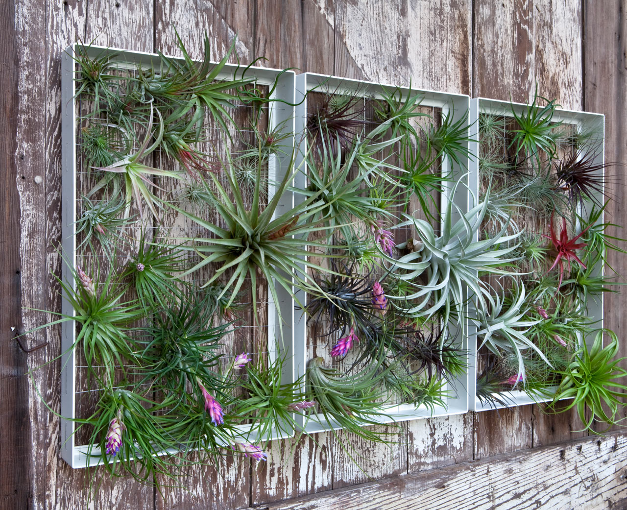 Living Wall Art Vertical Garden Frames by Airplantman ... on Backyard Wall Decor Ideas  id=92688