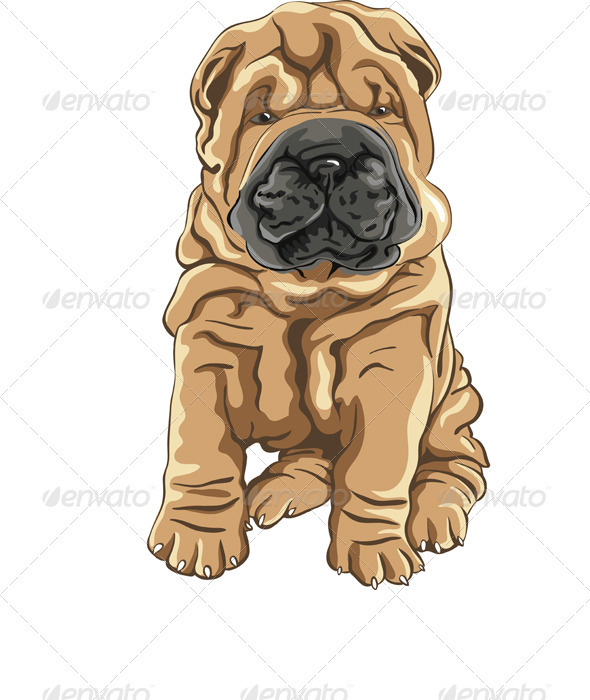 Vector Cute Red Shar Pei Dog Puppy Smiles GraphicRiver