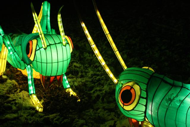 China Light 5