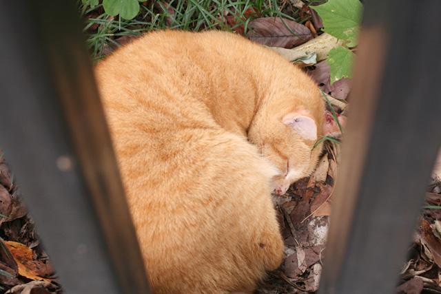 3 - cat