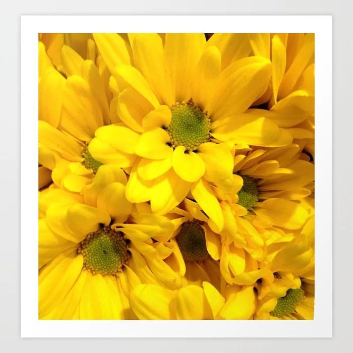 Sunday's Society6   Photo of yellow daisies, close-up