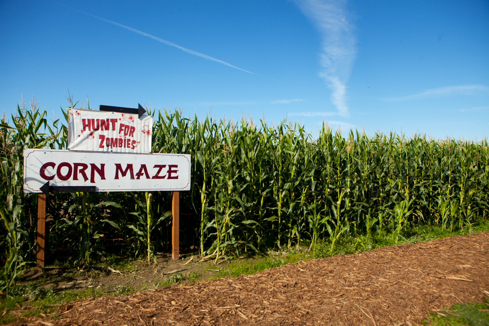 ANW_Corn Maze_10