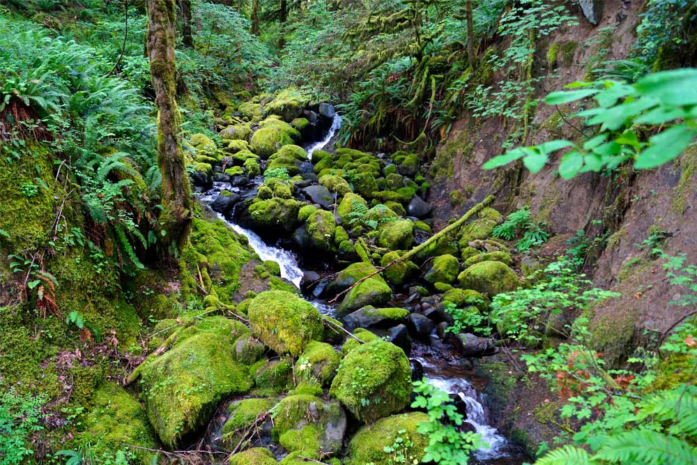 ancient hikes ruckel creek