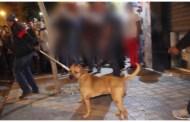 حي مولاي رشيد: الأمن يوقف شابين يهددان المارة بكلب بيتبول ويسلبان ممتلكاتهم