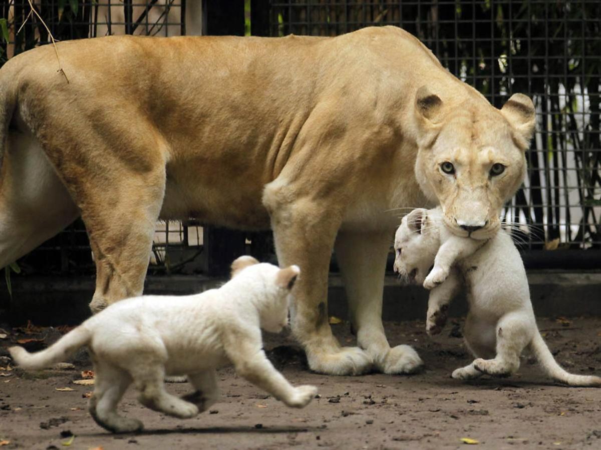 02o Animal Mothers