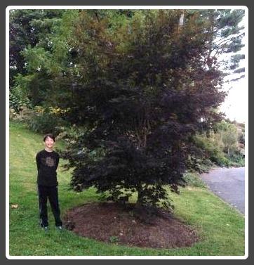 Harding Lane tree