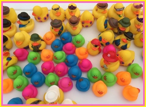 Duck - ducks