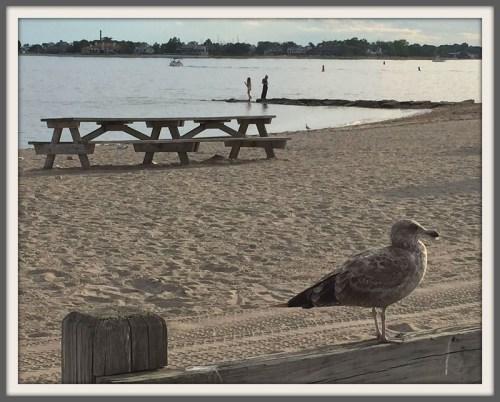 Seagull at Compo Beach