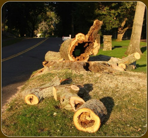 Dead trees - Bob Weingarten