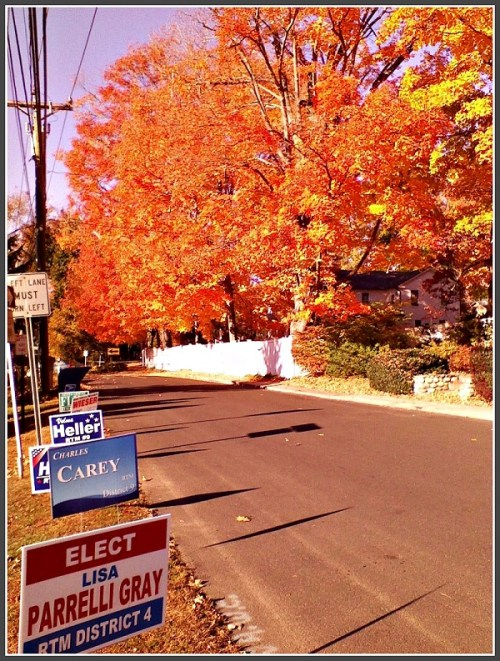Election signs 2015 - Fred Cantor