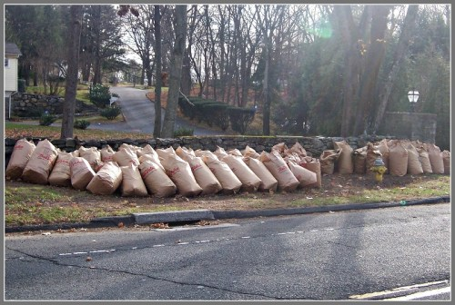 An autumn sight: bags of leaves awaiting pickup.