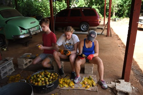 Peeling mangoes...