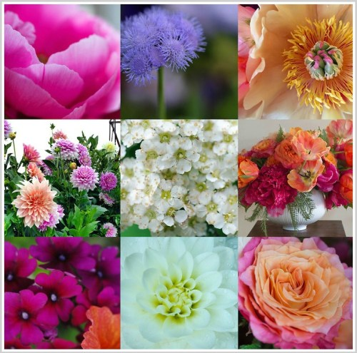 A collage of Stacy Bass' flower photos.