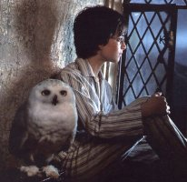 Harry-potter-and-hedwig[1]