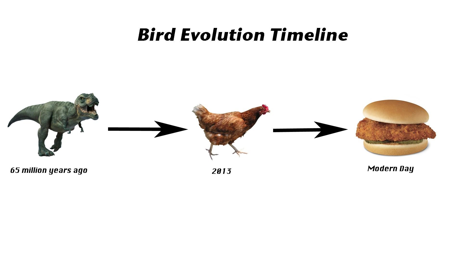 Evidence Of Evolution Worksheet 7 1