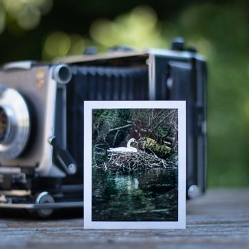 Video: Photographer uses a 4×5 large format camera and expired film for wildlife photography
