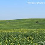 絶景!まるで緑の絨毯!モラヴィアの大草原の美しさは想像を超える!! -チェコ-|20.20