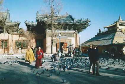 Monks and pigeons in the grounds of Gandantegchinlen Monastery, Ulaanbaatar