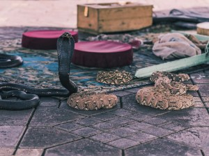 africa, animal, background, black, charmer, city, cobra, danger, djemaa, el, fna, hand, jemaa, man, marrakech, marrakesh, morocco, one, reptile, show, snake, square, tourism, travel
