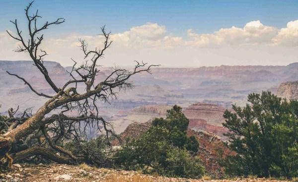 Colorado, Grand, arizona, canyon, colorado plateau, geology, grand canyon, grand canyon national park, landscape, national, national park, nature, outdoors, park, rim, river, rock, scenery, scenic, usa, valley