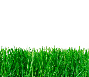 838 The smell of freshly cut grass – 1000 Awesome Things