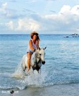 Swimming with Horses 18