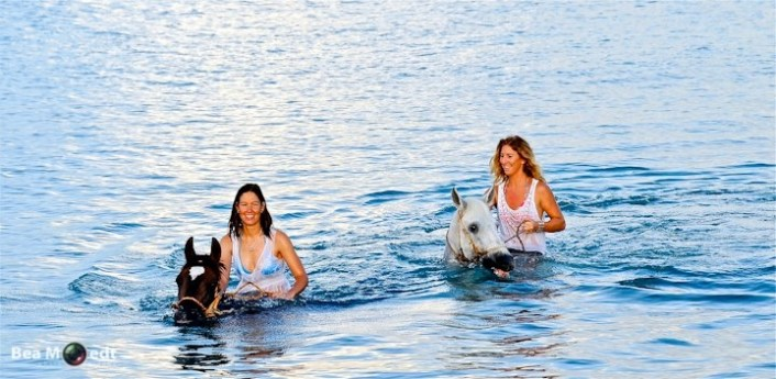Swimming with Horses 6