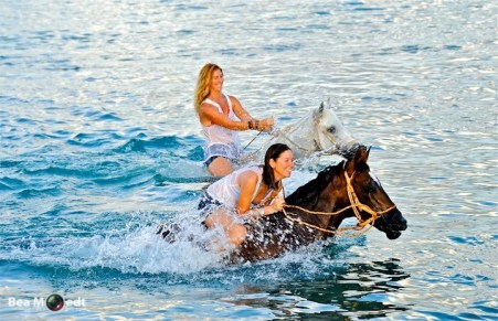 Swimming with Horses 9