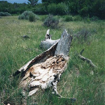 1000Butterflies.ca - mom fallen tree trunk