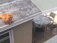 ああああああ!屋根から屋根に飛び移ろうとして失敗したネコちゃんの痛いビデオ。