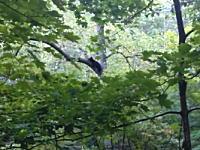 仕留めたと思った熊に不用意に近づいたハンターが襲われる衝撃映像。