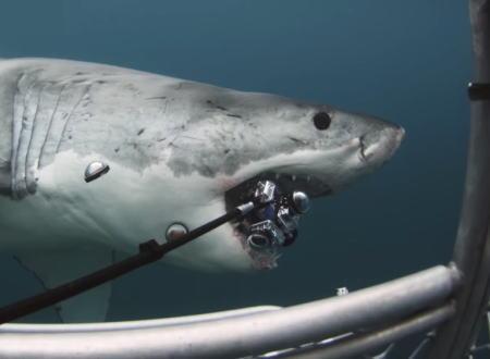 至近距離からホホジロザメの360°動画を撮ろうとして食われてしまい高価な撮影機材を失う。