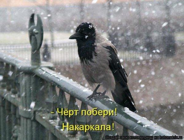 Фото приколы с животными » 1000prikolov.com: приколы и ...