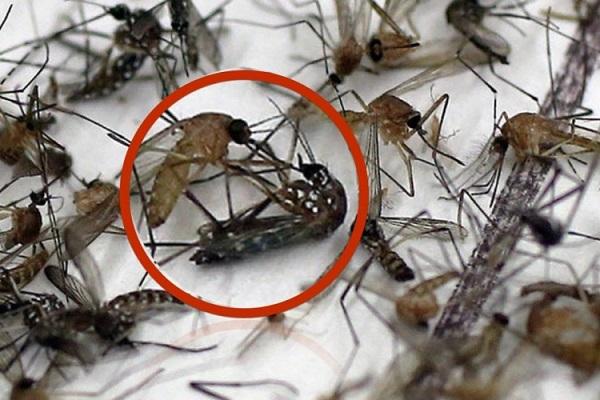 eliminar_mosquitos