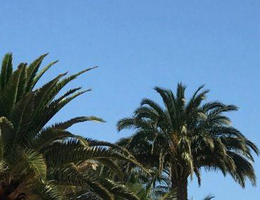 Gran Canaria Palmen