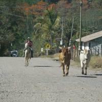 Costa Rica, ein Land der großen Naturvielfalt