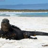"""Galápagos """"Big 15"""""""