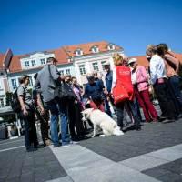 Vierbeinige Stadtführer in Vilnius unterwegs