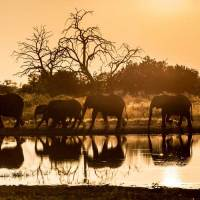 Wilderness Safaris eröffnet neues Qorokwe Camp in Botswana