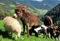 Urlaub auf dem Bauernhof – Ein etwas anderer Urlaub voller Erlebnisse