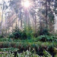 Erholung zwischen Meerblau und Waldgrün